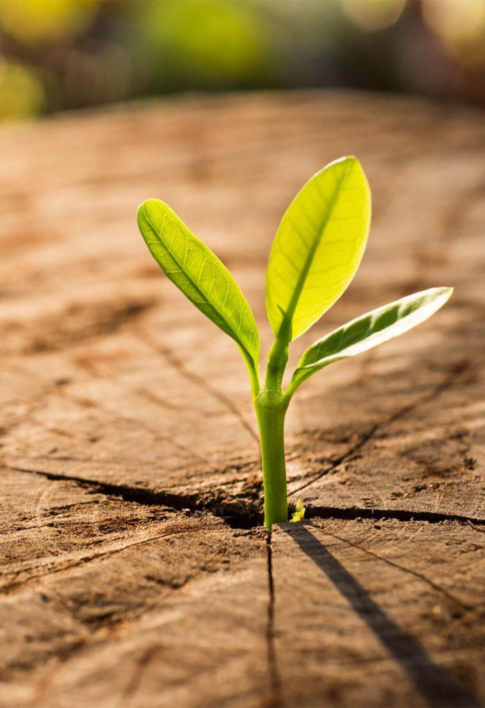 sostenibilità-della-filiera-del-legno